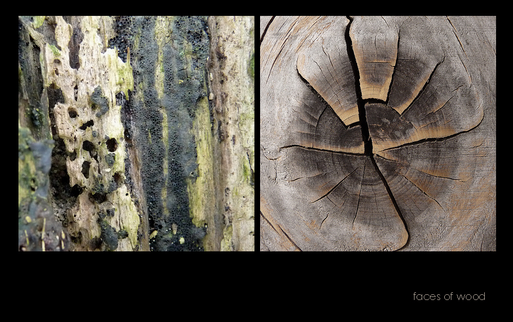 . faces of wood .