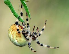 Faden spinnen