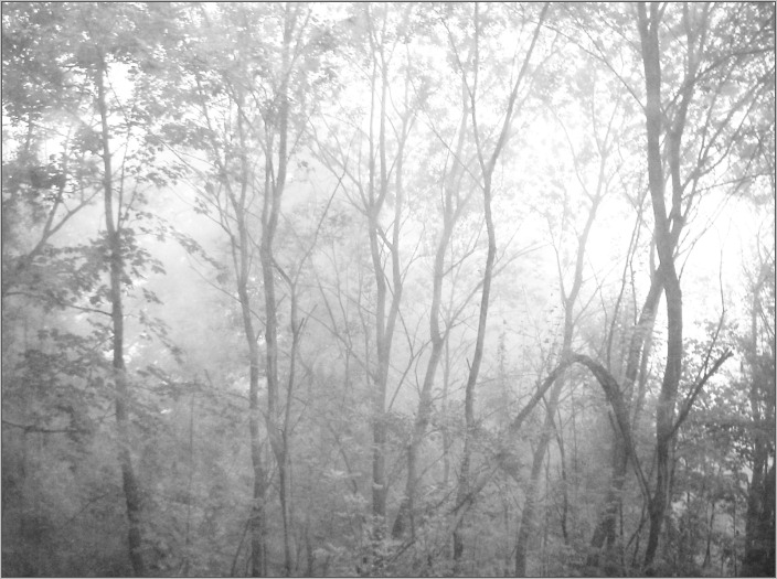 fading forest