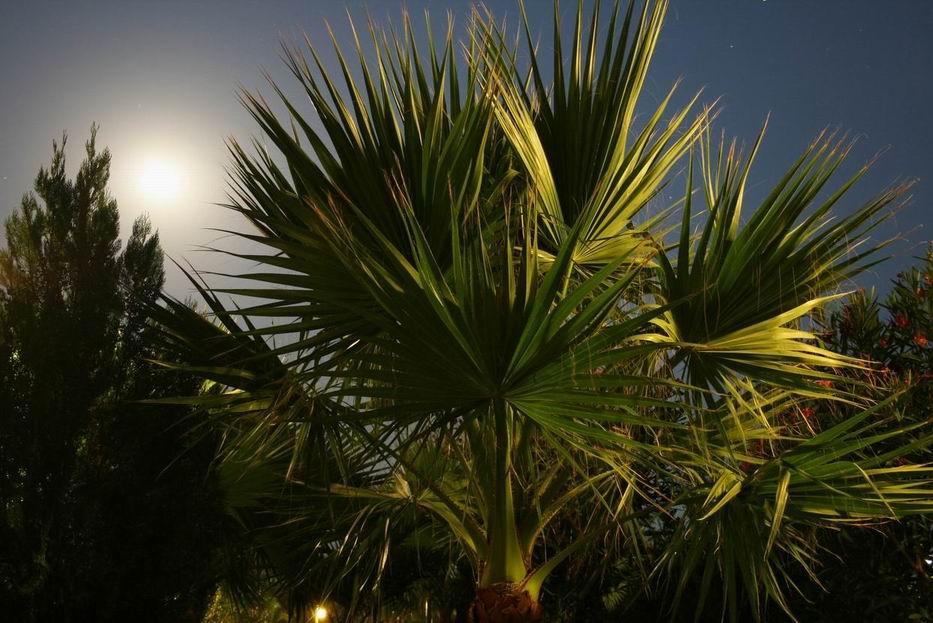 Fächer im Mondlicht