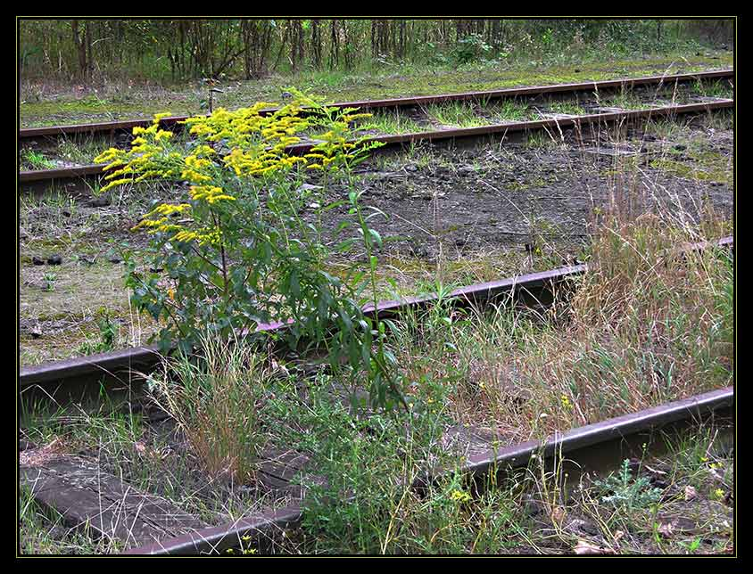 Fährt hier jemals noch ein Zug ?