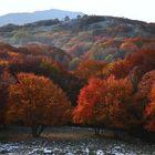 faggi di bosco Valliera