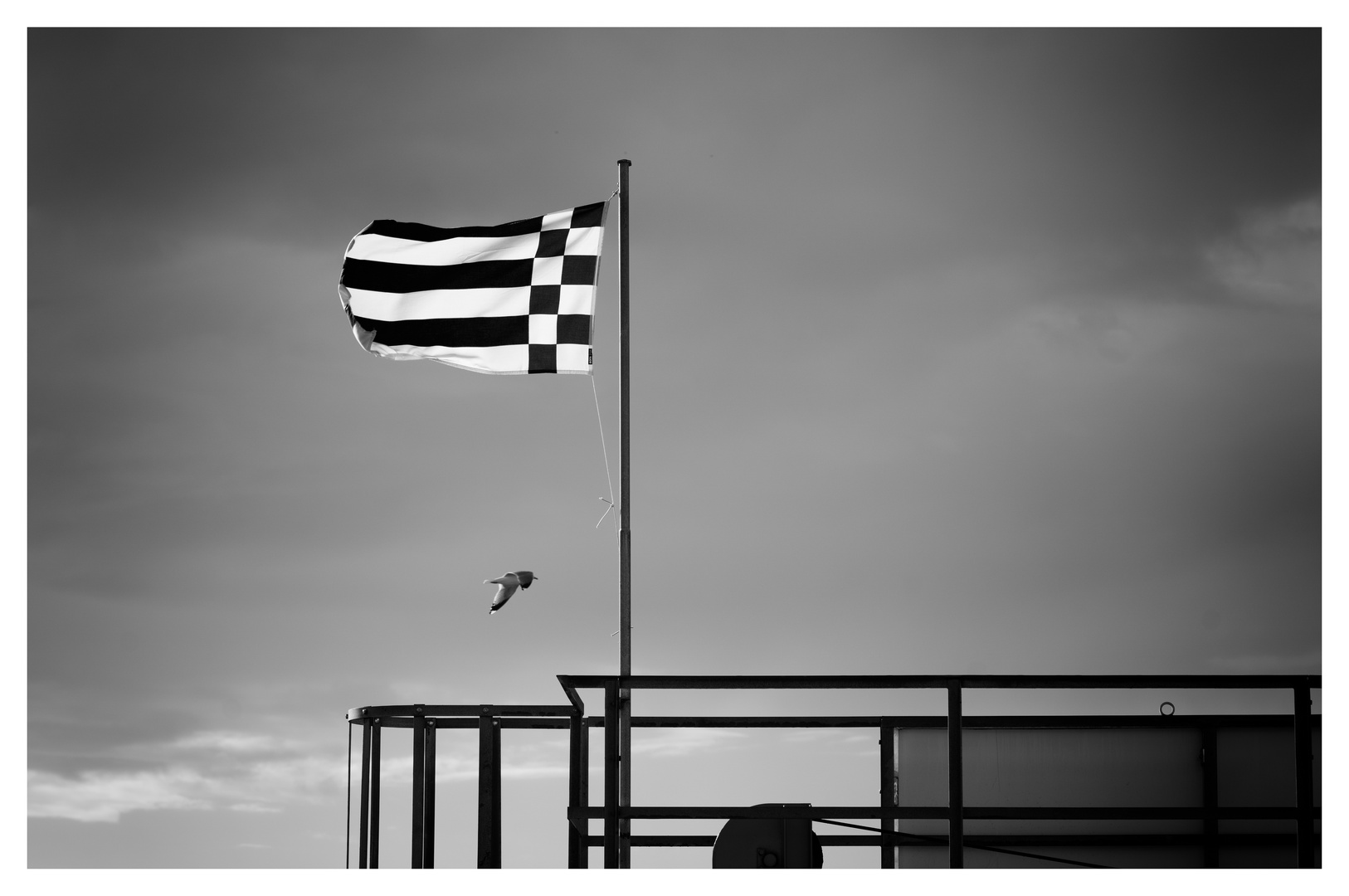 Fahne und Möwe