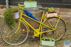 Fahrrad als Pflanzdekoration
