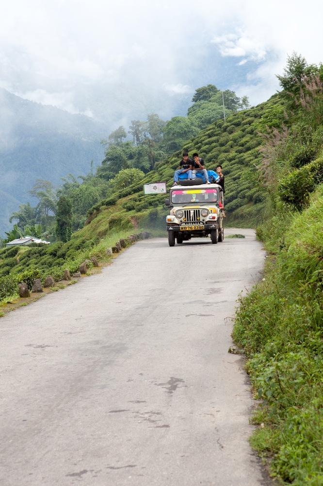 Fahrt durch die Teeplantage