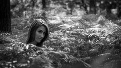 fairies forest V
