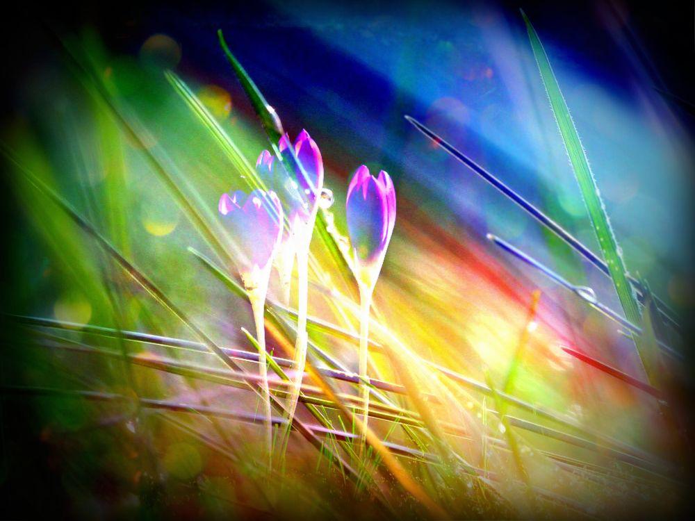 Fairy-spring