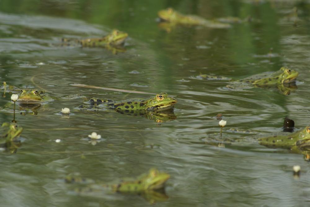 Fais comme une grenouille verte!! :)