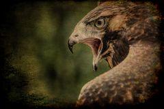 Falken 1