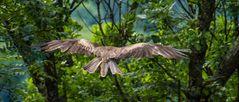 Falken und Bussarde