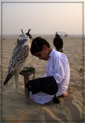 Falkenkind in der Wueste von Dubai
