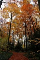 Fall at its best 2