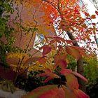 Fall Coloring.