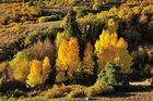 *fall-colors*