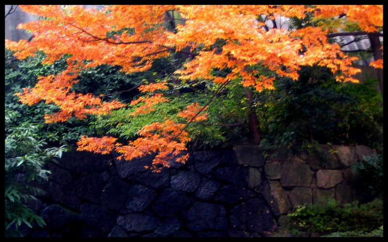 Fall colors in Tokyo