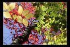 Fall Foliage, White Mountains, New Hampshire