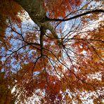 Fall in Japan-4