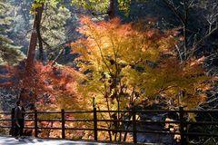 Fall in Japan-6