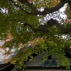 Fall in Japan-7