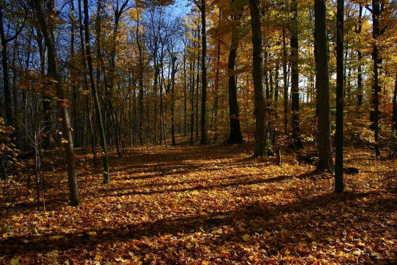 Fall in MI