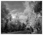 Fall In Oak Glen