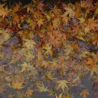 Fall in Rain