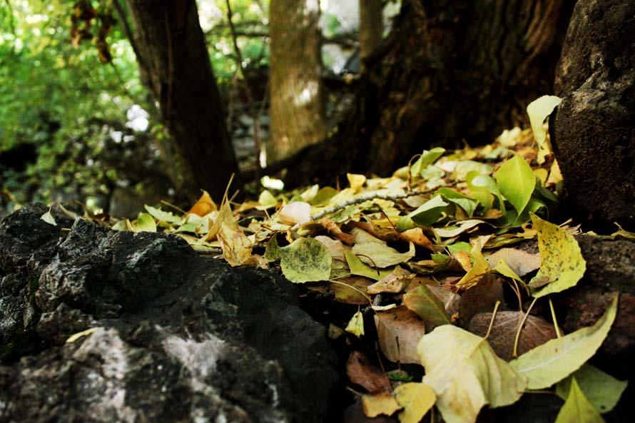 Fall in the rock
