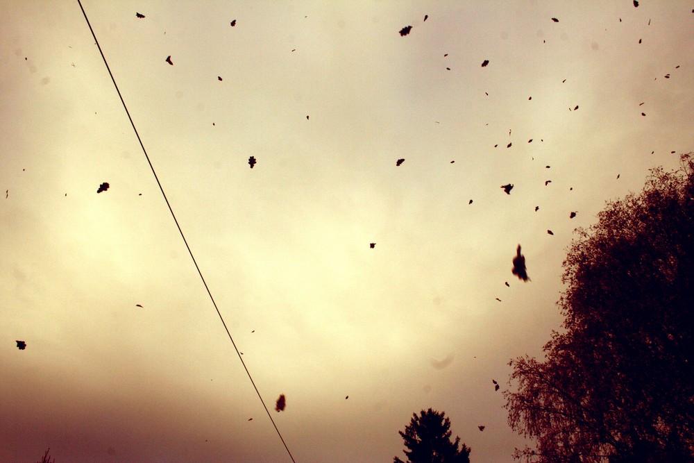 fall of leafs