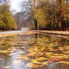 Fall & Rainy forest