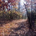 Fall walk path