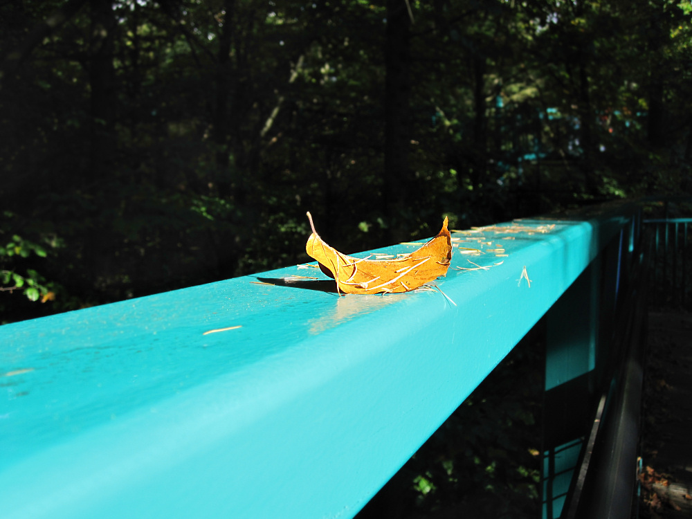 Fallen leaf on a railing