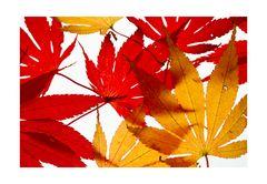 Fallen leaves-2