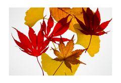 Fallen leaves-3