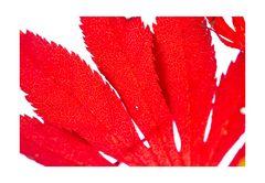 Fallen leaves-4