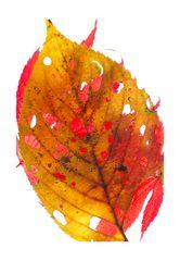 Fallen leaves-5