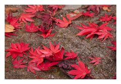 Fallen leaves-6