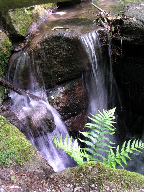 Fallendes Wasser an Farn
