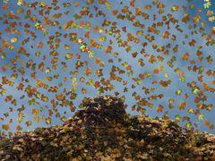 Falling leaves (MW 201011136)