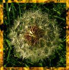 Fallschirme in der Herbstsonne...