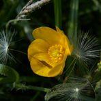 Fallschirmlandung auf weicher Blüte