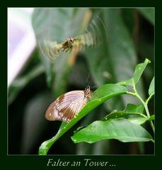 Falter an Tower