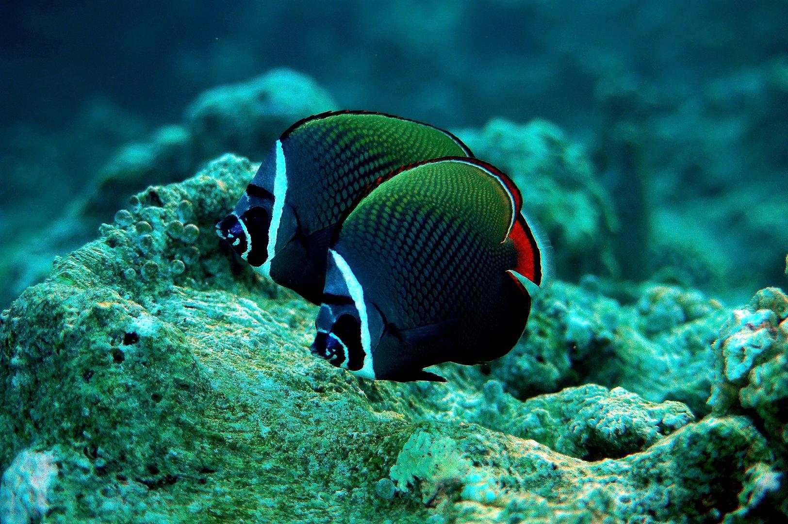 Malediven Tiere Gefährlich