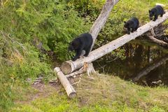 Familie Bär kommt zum Abendbrot