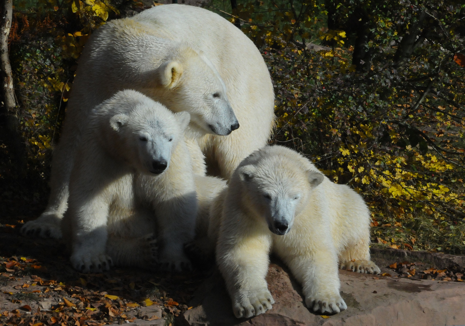 Familie Eisbär......