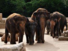 Familie Elefant