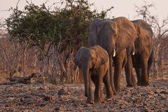 Familie Elefant kommt an den Fluss