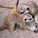 Familie Erdmann beim Spielen