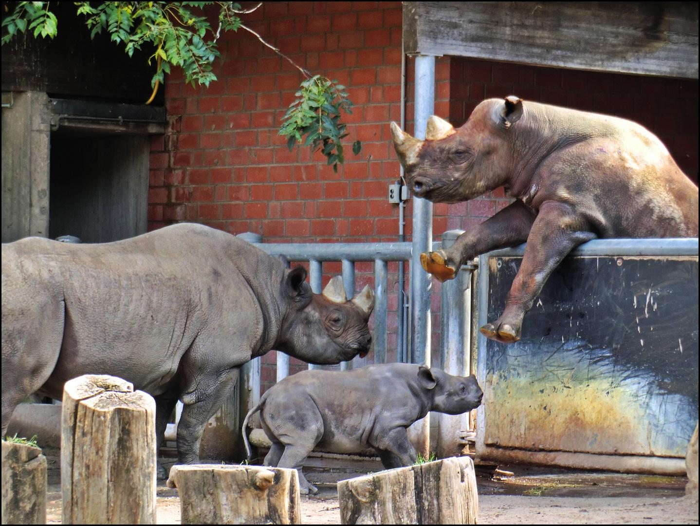 Familie Nashorn