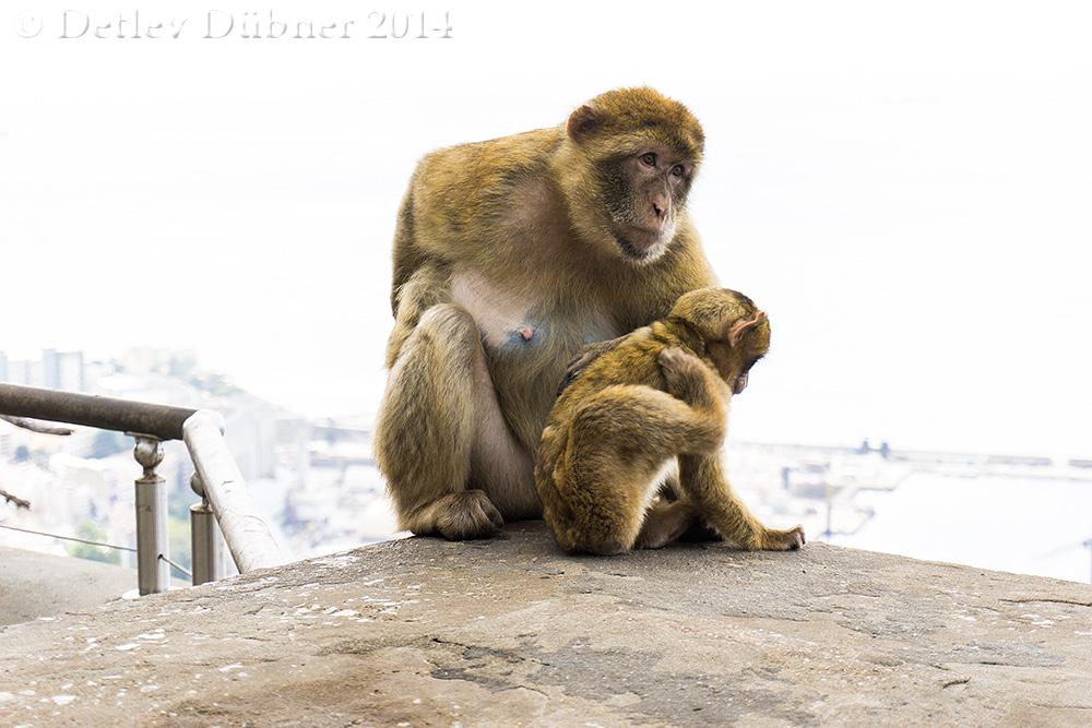 ...Familien-Idylle (2)...