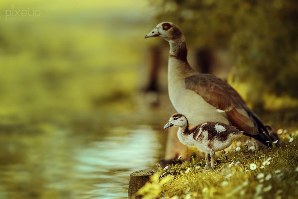 Familienausflug an den See